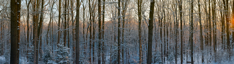 20100108_D3x_DSC4750_4762_pano_Master_extrap_to_3.6_to_1_37x10.2.jpg