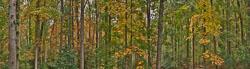 20111018_D3x_DSC7752-7821-Master-Pano_HDR-3.6x1-37x10.2.jpg